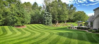 lawn ideas